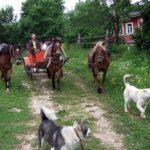 Horseback rides and trips near Staritsa village of Tver oblast