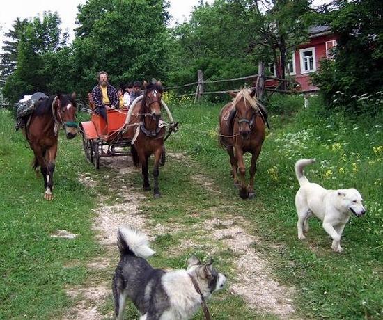 russia-tver-oblast-horseback-riding-1