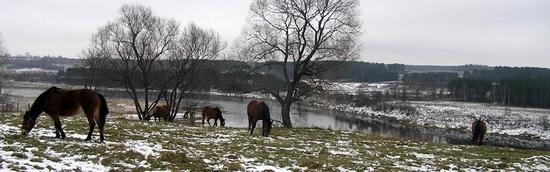 russia-tver-oblast-horseback-riding-7