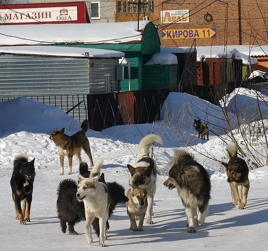 russian-provinces-sceneries-3