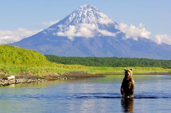 Kamchatka region, Russia bears view