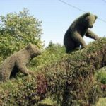 Strange animals inhabiting Krasnoyarsk city streets