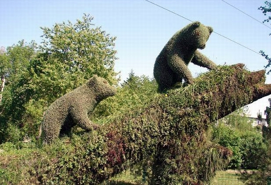 Krasnoyarsk city, Russia flower animals view