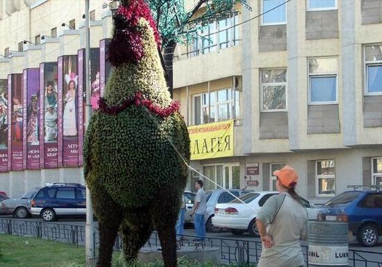 Krasnoyarsk city, Russia flower animals view