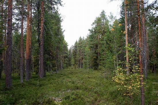 Vodlozersky national park, Russia view 17