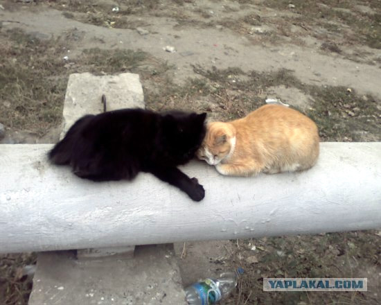 Volgograd city, Russia cats heating system view 3