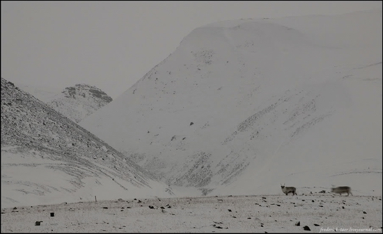 Russian Spitsbergen winter landscapes 11