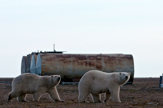 Wrangel Island, Russia pollution view 7
