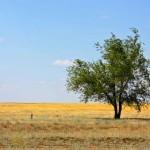 Unique nature of Astrakhan oblast