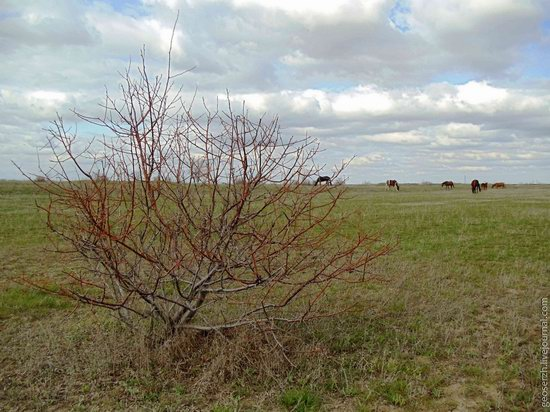 Astrakhan region, Russia nature view 17