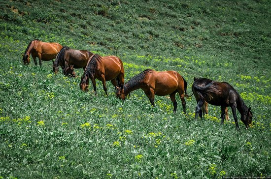 The beautiful scenery of the mountain Ingushetia, Russia photo 23