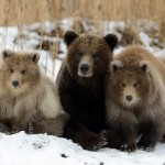 Paradise for Bears in the South Kamchatka Wildlife Sanctuary