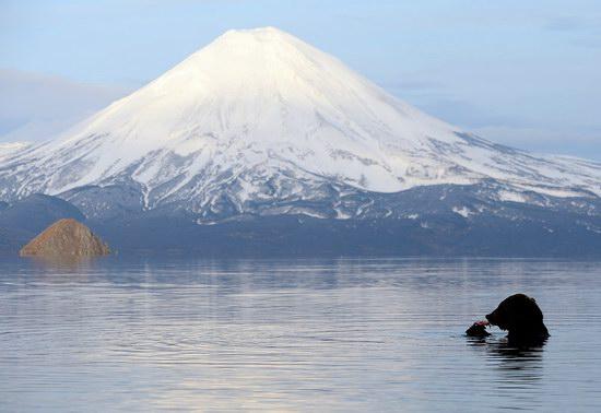 Bears in the South Kamchatka Wildlife Sanctuary, Russia, photo 13