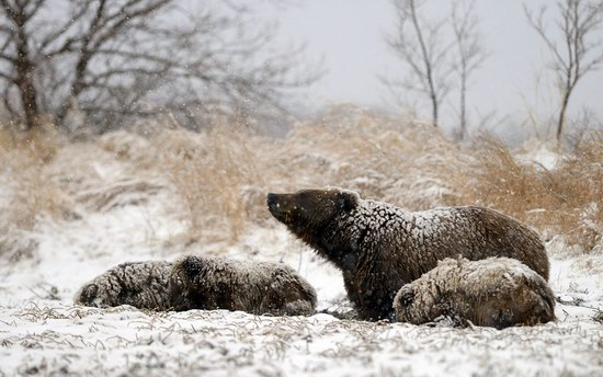 Bears in the South Kamchatka Wildlife Sanctuary, Russia, photo 6
