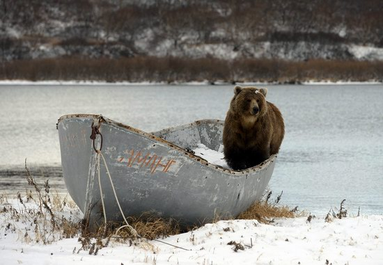 Bears in the South Kamchatka Wildlife Sanctuary, Russia, photo 7