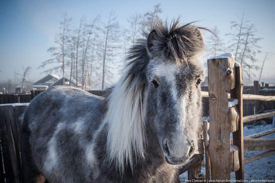 Living in frosty Yakutia, Russia, photo 1