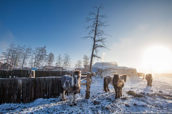 Living in frosty Yakutia, Russia, photo 13
