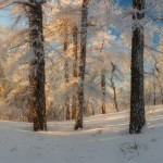 Russian winter forest from a fairy tale