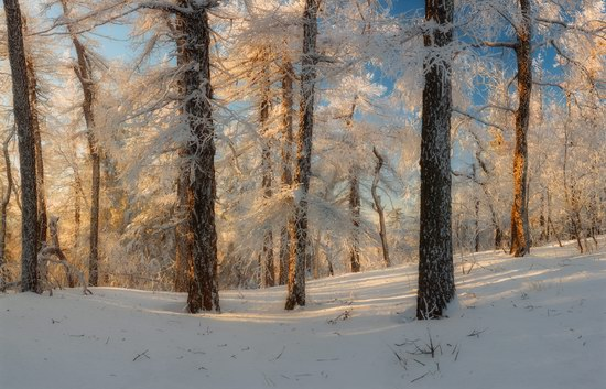 Russian winter forest from a fairy tale, photo 1