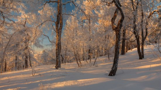 Russian winter forest from a fairy tale, photo 2