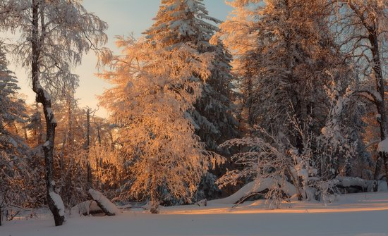 Russian winter forest from a fairy tale, photo 3