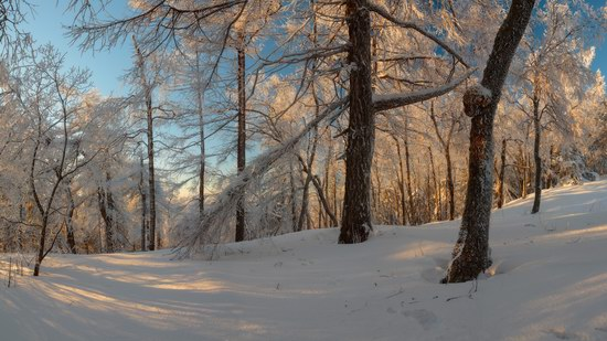 Russian winter forest from a fairy tale, photo 4