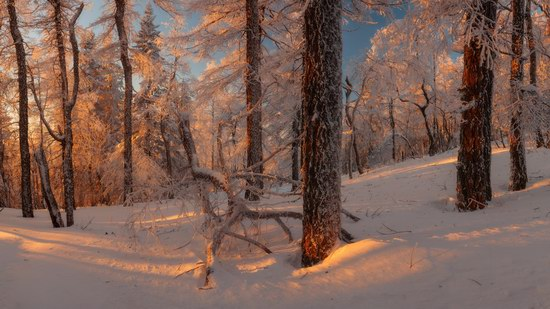Russian winter forest from a fairy tale, photo 5