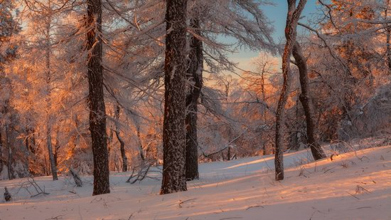 Russian winter forest from a fairy tale, photo 6