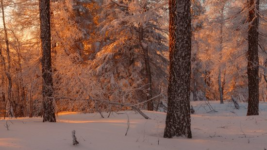 Russian winter forest from a fairy tale, photo 7