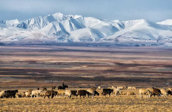The Altai Mountains beauty, Russia, photo 2