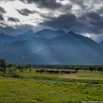 The beauty of Zabaykalye prairie nature