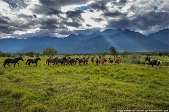 Zabaykalye prairie, Buryatia Republic, Russia, photo 5