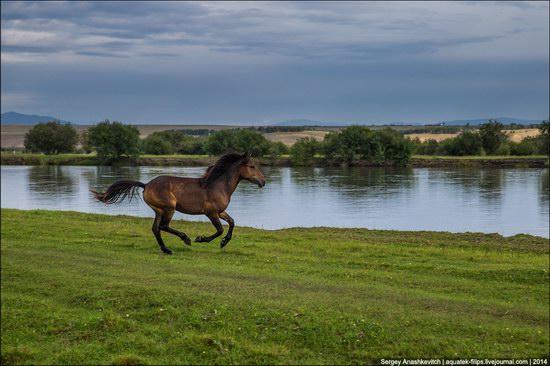 Zabaykalye prairie, Buryatia Republic, Russia, photo 7