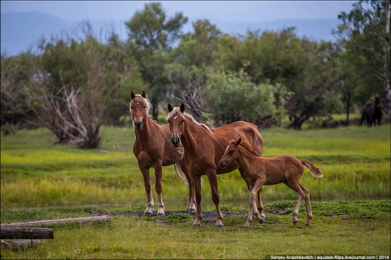 Zabaykalye prairie, Buryatia Republic, Russia, photo 8