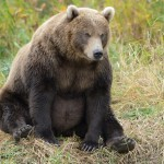South Kamchatka Reserve – the most bearish place in Russia
