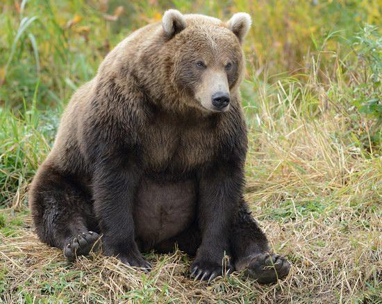 South Kamchatka Reserve bears, Russia, photo 1