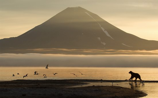 South Kamchatka Reserve bears, Russia, photo 3
