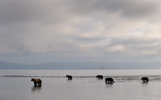 South Kamchatka Reserve bears, Russia, photo 4