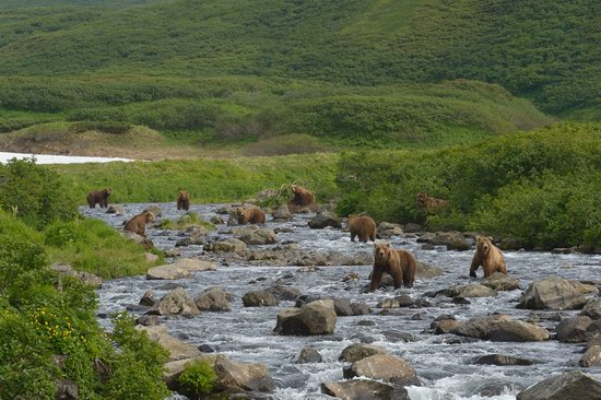South Kamchatka Reserve bears, Russia, photo 5