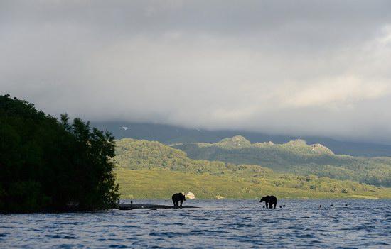 South Kamchatka Reserve bears, Russia, photo 7