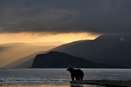 South Kamchatka Reserve bears, Russia, photo 8