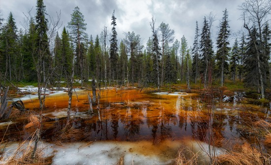Northern Karelia and the Kola Peninsula, Russia, photo 18