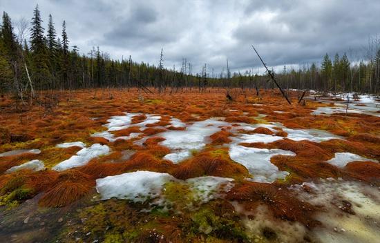 Northern Karelia and the Kola Peninsula, Russia, photo 19