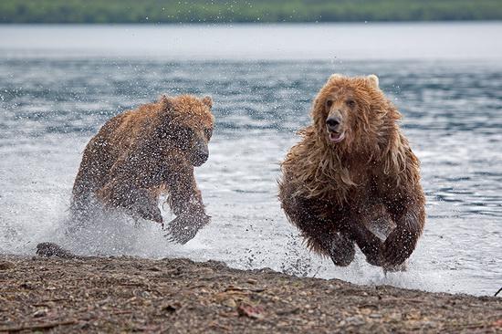 Kurilskoye Lake bears, Kamchatka, Russia, photo 19