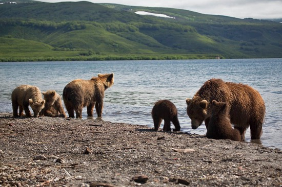 Kurilskoye Lake bears, Kamchatka, Russia, photo 3