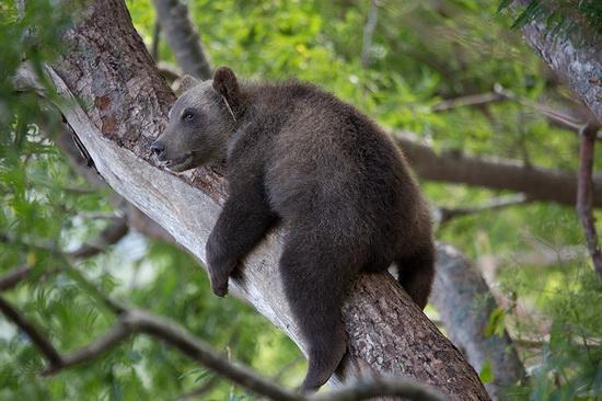 Kurilskoye Lake bears, Kamchatka, Russia, photo 6
