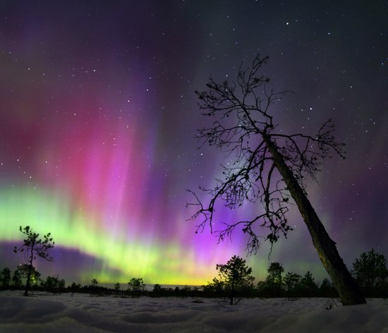 Multicolored aurora borealis, Sverdlovsk region, Russia, photo 3