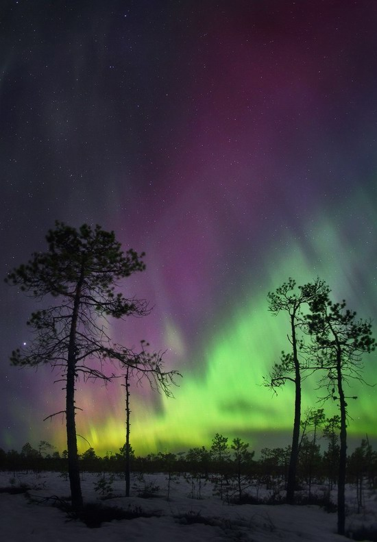 Multicolored aurora borealis, Sverdlovsk region, Russia, photo 8