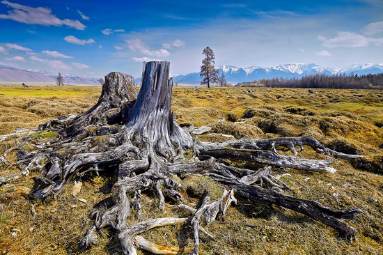 Altai region landscapes, Russia, photo 6