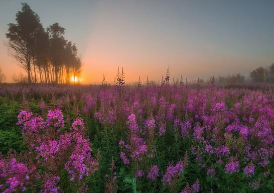 Yaroslavl region nature, central Russia, photo 1